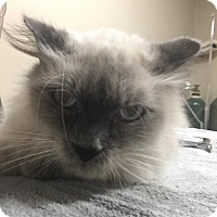 Adopt A Pet :: Savanah Sam - Carencro, LA