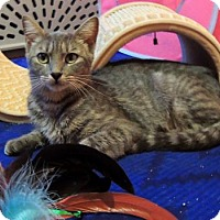 Adopt A Pet :: Sweet Pea **FREE TO GOOD HOME** - Knoxville, TN