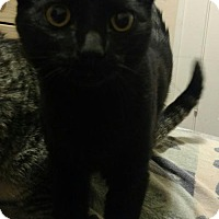Adopt A Pet :: Bettina - Cedar Rapids, IA