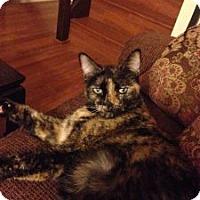 Adopt A Pet :: Rylee (Courtesy Listing) - Encinitas, CA