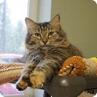 Adopt A Pet :: Daisy - Libby, MT
