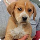 Adopt A Pet :: Ember (5 lb) Cutie Pie!