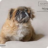 Adopt A Pet :: Ming - Phoenix, AZ