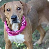 Adopt A Pet :: TOXIE - Tallahassee, FL