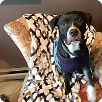 Adopt A Pet :: Dasher - Cool Ridge, WV