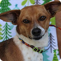 Adopt A Pet :: WILLY - Red Bluff, CA