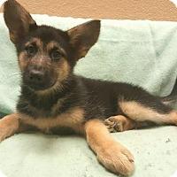 Adopt A Pet :: Gina Carano - Modesto, CA