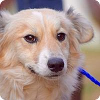 Adopt A Pet :: Jake Perry - Brooklyn, NY