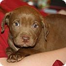 Adopt A Pet :: Nestle