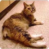 Adopt A Pet :: Leigh - Irvine, CA