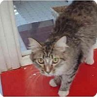 Adopt A Pet :: Rose - El Cajon, CA
