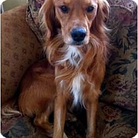 Adopt A Pet :: Red Rover - Denver, CO