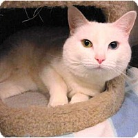 Adopt A Pet :: Rhea - Warminster, PA