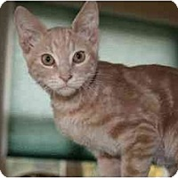 Adopt A Pet :: Jupiter (& Jester) - Arlington, VA