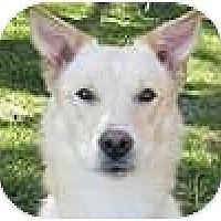 Adopt A Pet :: Felix - Hamilton, ON