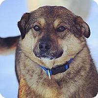 Adopt A Pet :: Aurora - Saskatoon, SK