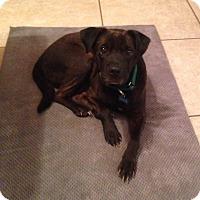 Adopt A Pet :: Cody - Raritan, NJ