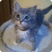 Adopt A Pet :: Hiro - McDonough, GA