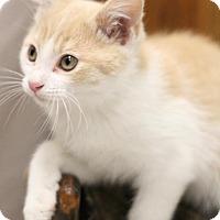 Adopt A Pet :: Leon - Sacramento, CA