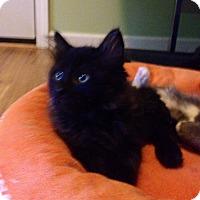 Adopt A Pet :: Bubbles - Monroe, GA