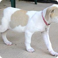 Adopt A Pet :: Madonna - Bedford, VA