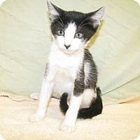 Adopt A Pet :: Clover - Oxford, MS