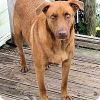 Adopt A Pet :: Skip - Waller, TX