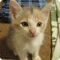 Adopt A Pet :: STARBURST - Acme, PA