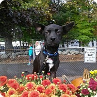 Adopt A Pet :: Yoda - in New England - kennebunkport, ME