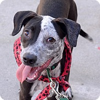 Adopt A Pet :: Fawn - Los Angeles, CA