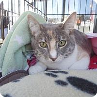 Adopt A Pet :: Badger and Squirrel - Berkeley, CA