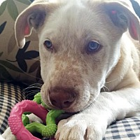 Adopt A Pet :: **Topaz** - Fullerton, CA