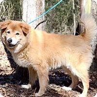 Adopt A Pet :: Duffy - Willingboro, NJ