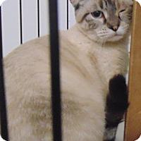 Adopt A Pet :: Jill - Jackson, MO