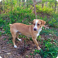 Adopt A Pet :: Zippy - Walton County, GA