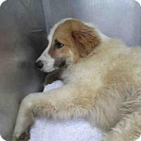 Adopt A Pet :: FINN - Conroe, TX