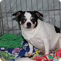 Adopt A Pet :: Rayna - New Richmond,, WI