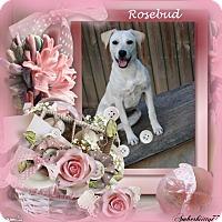 Adopt A Pet :: Rosebud - Crowley, LA
