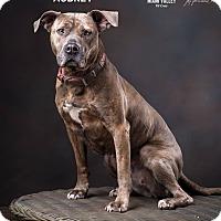 Adopt A Pet :: Aubrey - Dayton, OH