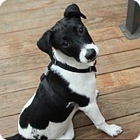 Adopt A Pet :: Heli - Mount Laurel, NJ