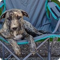 Adopt A Pet :: Jefa - Detroit, MI