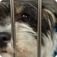 Adopt A Pet :: Maggie - Chester, IL