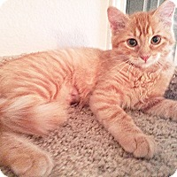 Adopt A Pet :: Princess Peach - Arlington/Ft Worth, TX