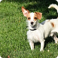 Adopt A Pet :: Jasper - Meridian, ID