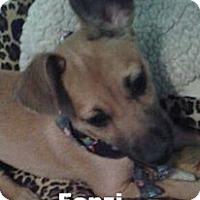 Adopt A Pet :: Fonzi - Modesto, CA