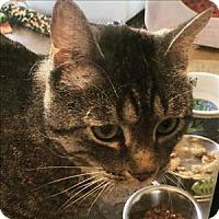 Adopt A Pet :: Ti Ti - Sherwood, OR