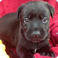 Adopt A Pet :: Rayden - Trenton, NJ