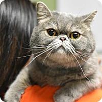 Adopt A Pet :: Chuck - Philadelphia, PA