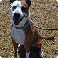Adopt A Pet :: Cletus - Larned, KS