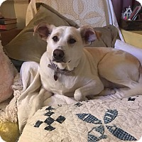 Adopt A Pet :: Daisy - Hamden, CT